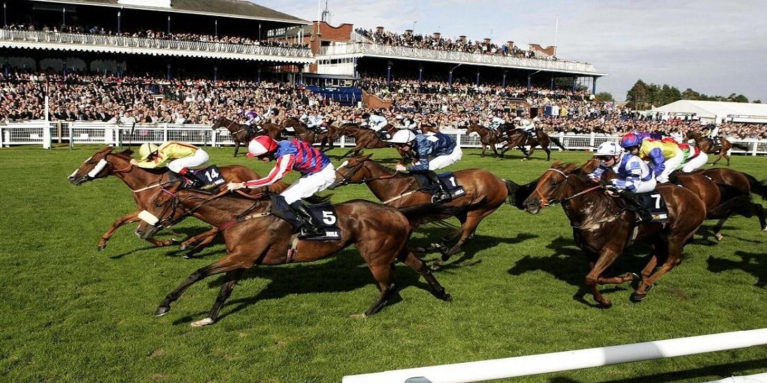 racing post betting